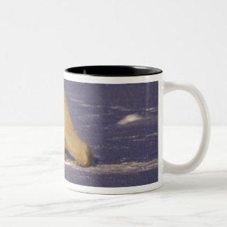 NA, Canada, Manitoba, Churchill, Polar bear Coffee Mug