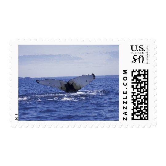 NA, Canada, Newfoundland, Trinity Bay. Humpback Postage