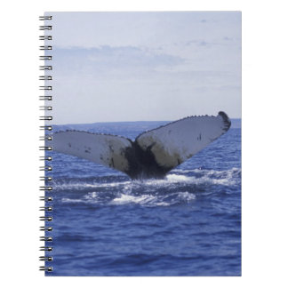 NA, Canada, Newfoundland, Trinity Bay. Humpback Spiral Note Books