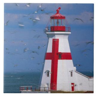 NA, Canadá, Nuevo Brunswick, isla de Campobello. 8 Azulejo Cuadrado Grande