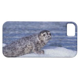 Na, Etats-Unis, Alaska, Alaska du sud-est, Le Cont iPhone SE/5/5s Case