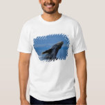 NA, los E.E.U.U., Alaska, Alaska suroriental, Camisas