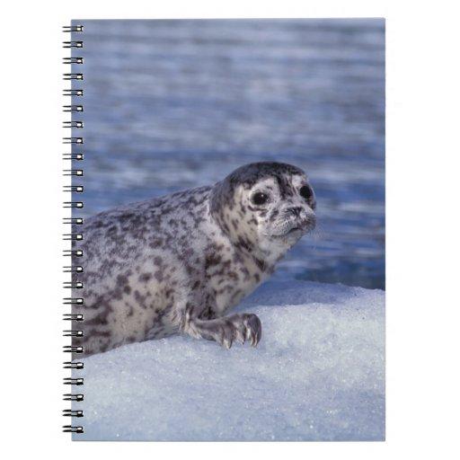 NA, los E.E.U.U., Alaska, Alaska suroriental, Le C Libros De Apuntes Con Espiral