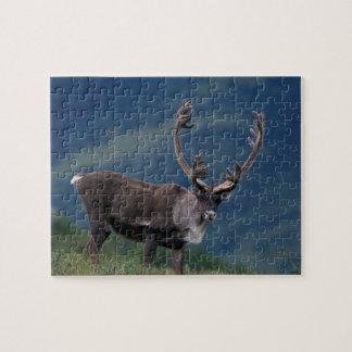 NA, los E.E.U.U., Alaska, Denali NP, caribú 2 de B Puzzle Con Fotos