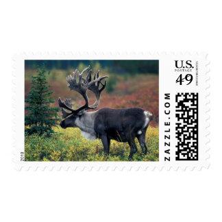 NA, los E.E.U.U., Alaska, Denali NP, caribú 3 de Timbre Postal