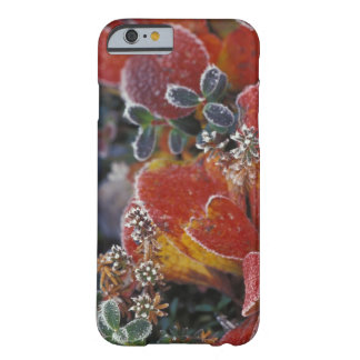 NA, los E.E.U.U., Alaska, Denali NP helado, Funda Barely There iPhone 6