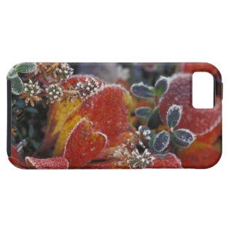 NA, los E.E.U.U., Alaska, Denali NP helado, iPhone 5 Carcasas