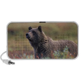 NA, los E.E.U.U., Alaska, Denali NP, oso grizzly Altavoces