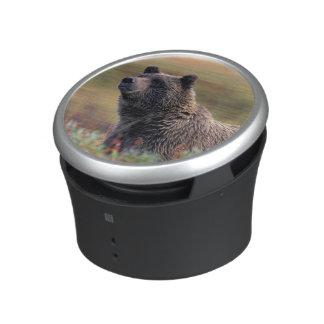 NA, los E.E.U.U., Alaska, Denali NP, oso grizzly Altavoz Bluetooth