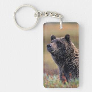 NA, los E.E.U.U., Alaska, Denali NP, oso grizzly Llavero Rectangular Acrílico A Doble Cara