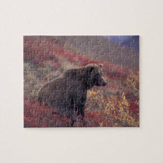 NA, los E.E.U.U., Alaska, Denali NP. Un grisáceo f Puzzles Con Fotos