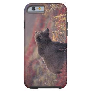 NA, los E.E.U.U., Alaska, Denali NP. Un grisáceo Funda Resistente iPhone 6