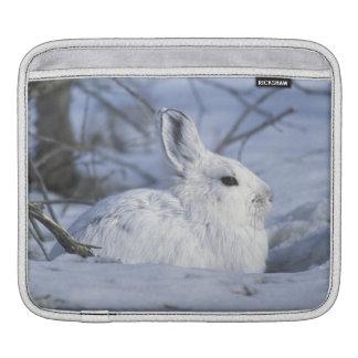 NA, los E.E.U.U., Alaska. Fauna nacional ártica Fundas Para iPads