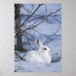 NA, los E.E.U.U., Alaska. Fauna nacional ártica Impresiones