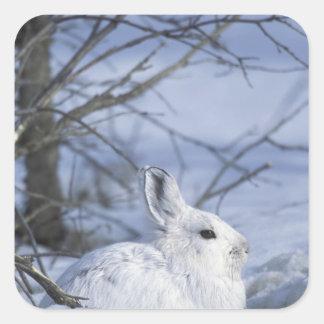 NA, los E.E.U.U., Alaska. Fauna nacional ártica Calcomanía Cuadradas Personalizada