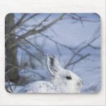 NA, los E.E.U.U., Alaska. Fauna nacional ártica Tapete De Ratones