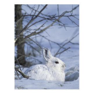 NA, los E.E.U.U., Alaska. Fauna nacional ártica Tarjeta Postal