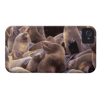 NA, los E.E.U.U., Alaska, islas de Pribilof, piel iPhone 4 Carcasas