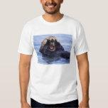 NA, los E.E.U.U., Alaska. Las nutrias de mar son Camisas