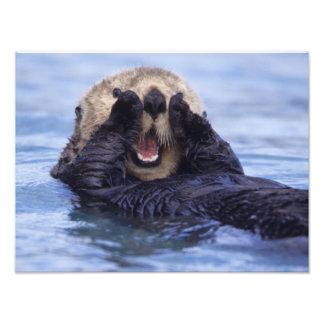 NA, los E.E.U.U., Alaska. Las nutrias de mar son l Impresiones Fotograficas