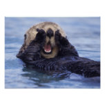 NA, los E.E.U.U., Alaska. Las nutrias de mar son l Póster