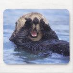 NA, los E.E.U.U., Alaska. Las nutrias de mar son l Mousepad