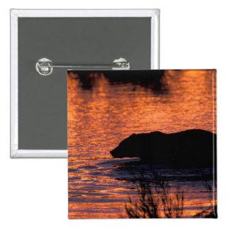 NA, los E.E.U.U., Alaska, oso grizzly Pin Cuadrada 5 Cm