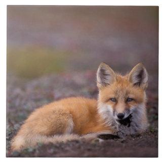 NA, los E.E.U.U., Alaska, zorro rojo, vulpes del V Tejas Ceramicas