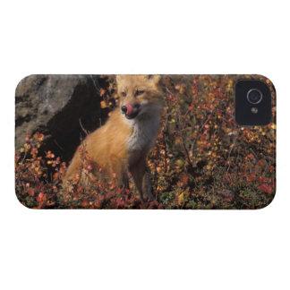 NA, los E.E.U.U., Alaska, zorro rojo, vulpes del V iPhone 4 Case-Mate Funda