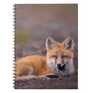 NA, los E.E.U.U., Alaska, zorro rojo, vulpes del V Libros De Apuntes