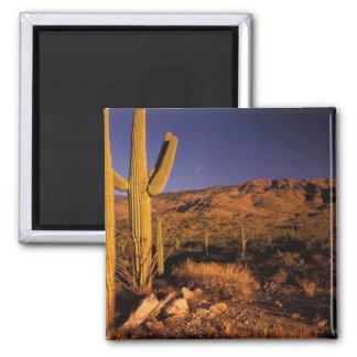 NA, los E.E.U.U., Arizona, monumento nacional del  Imán De Frigorífico