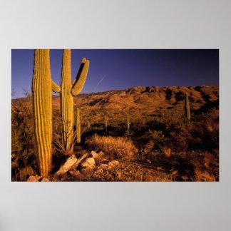 NA, los E.E.U.U., Arizona, monumento nacional del  Posters