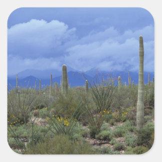 NA, los E.E.U.U., Arizona, monumento nacional del  Colcomania Cuadrada