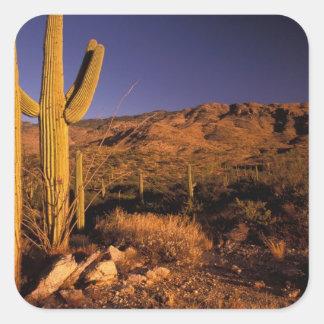 NA, los E.E.U.U., Arizona, monumento nacional del  Calcomania Cuadradas Personalizadas