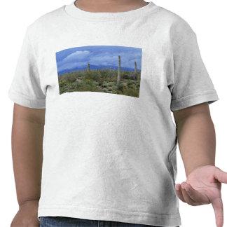 NA, los E.E.U.U., Arizona, monumento nacional del  Camisetas