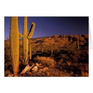 NA, los E.E.U.U., Arizona, monumento nacional del  Tarjeta