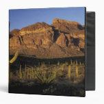 NA, los E.E.U.U., Arizona. Nacional 2 del cactus d