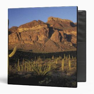 """NA, los E.E.U.U., Arizona. Nacional 2 del cactus d Carpeta 1 1/2"""""""