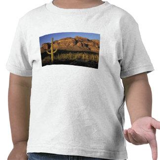 NA los E E U U Arizona Nacional 2 del cactus d Camisetas