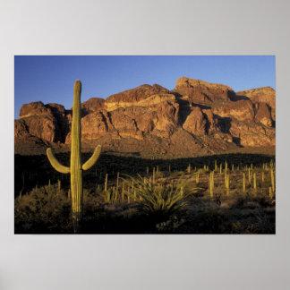 NA, los E.E.U.U., Arizona. Nacional 2 del cactus d Póster