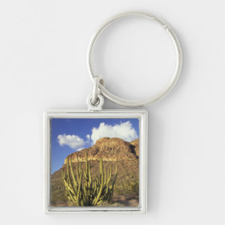 NA los E E U U Arizona Nacional 3 del cactus d Llavero Personalizado