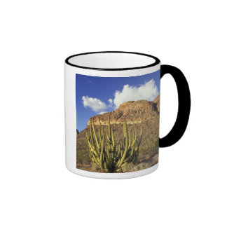 NA, los E.E.U.U., Arizona. Nacional 3 del cactus Taza A Dos Colores
