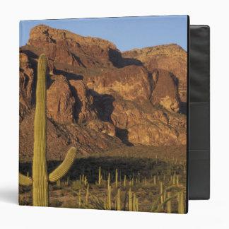 """NA, los E.E.U.U., Arizona. Nacional del cactus del Carpeta 1 1/2"""""""