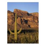 NA, los E.E.U.U., Arizona. Nacional del cactus del Postal
