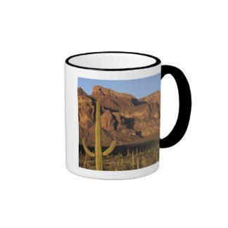 NA, los E.E.U.U., Arizona. Nacional del cactus del Taza A Dos Colores