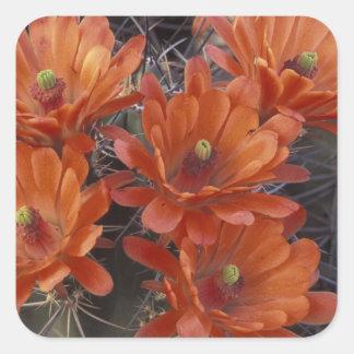 NA, los E.E.U.U., Arizona, San Javier. Cactus de Pegatina Cuadrada