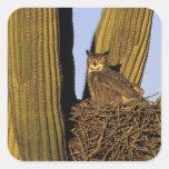 NA, los E.E.U.U., Arizona, Tucson. Gran búho de Pegatina Cuadrada