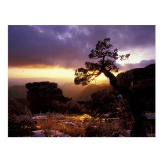 NA, los E.E.U.U., Arizona, Tucson, puesta del sol Tarjetas Postales
