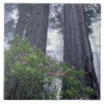 NA, los E.E.U.U., California. Parque de estado de  Azulejos