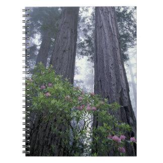 NA, los E.E.U.U., California. Parque de estado de  Notebook